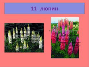 11  люпин
