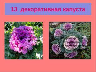 13  декоративная капуста