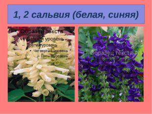 1, 2 сальвия (белая, синяя)