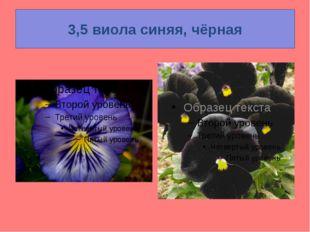 3,5 виола синяя, чёрная
