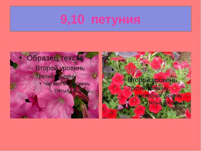 9,10  петуния