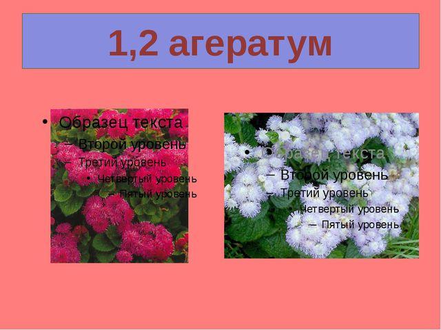 1,2 агератум
