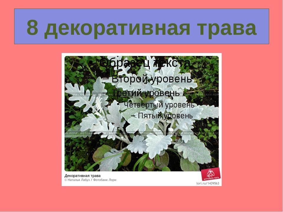 8 декоративная трава
