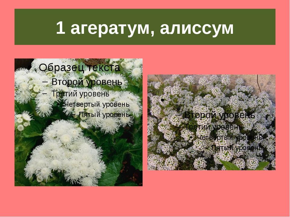 1 агератум, алиссум