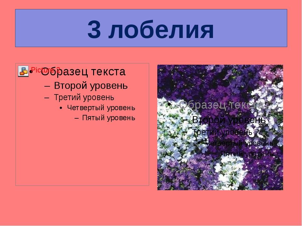 3 лобелия