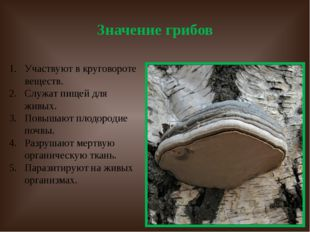 Значение грибов Участвуют в круговороте веществ. Служат пищей для живых. Повы