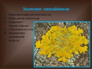 Значение лишайников Первопроходцы растительности. Корм диким животным. Разруш