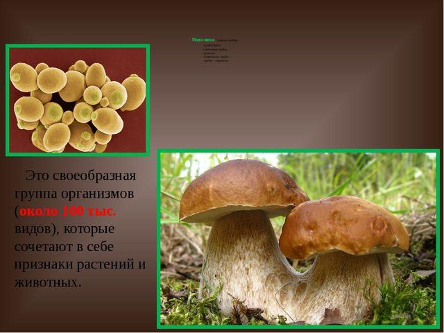 Микология - наука о грибах. Существуют: - плесневые грибы; - дрожжи; - шляпо...