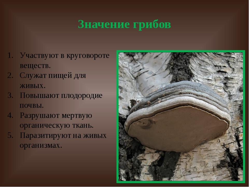 Значение грибов Участвуют в круговороте веществ. Служат пищей для живых. Повы...