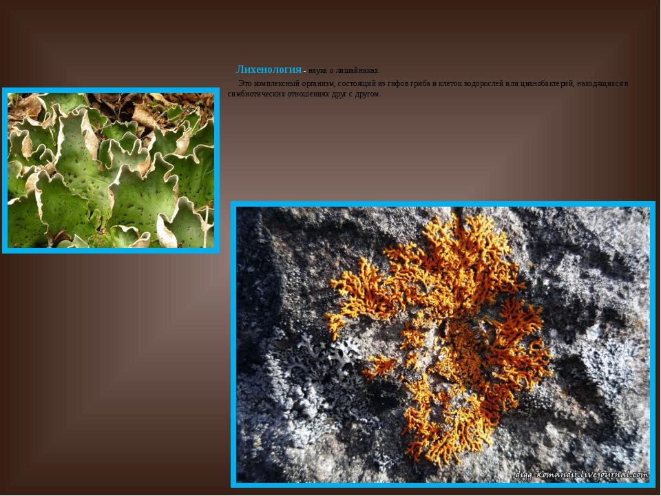 Лихенология - наука о лишайниках. Это комплексный организм, состоящий из гиф...