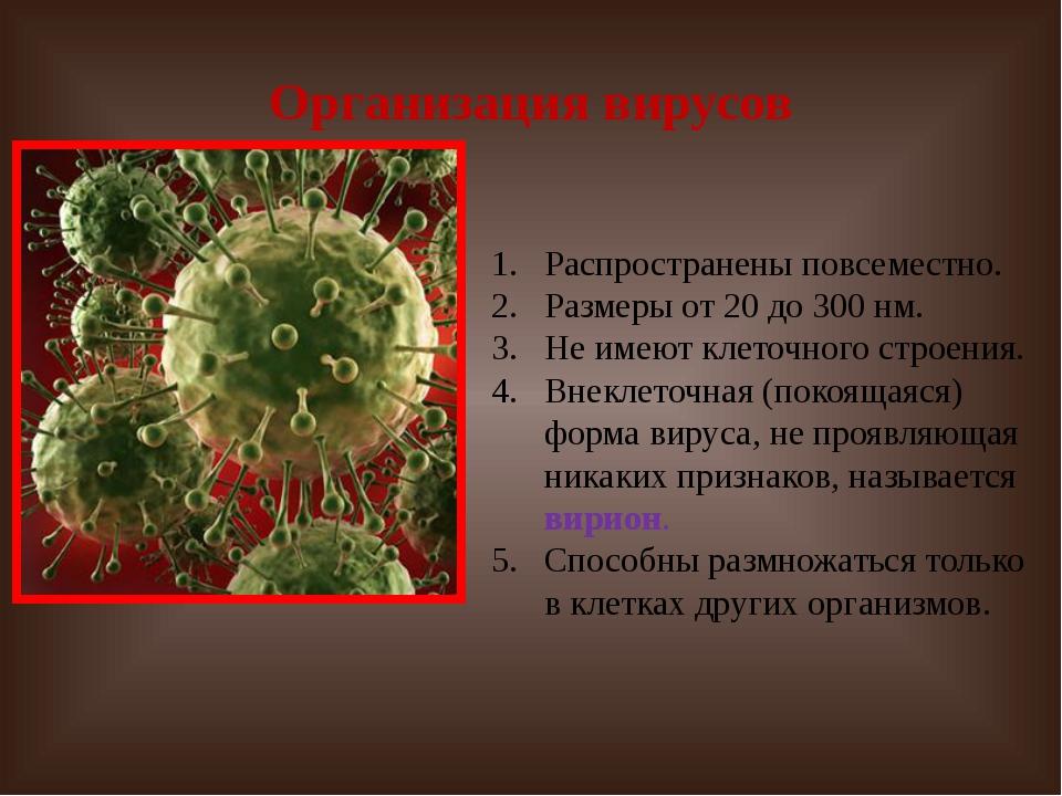 Организация вирусов Распространены повсеместно. Размеры от 20 до 300 нм. Не и...