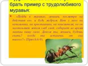 Мудрый Соломон советует брать пример с трудолюбивого муравья:  «Пойди к мура