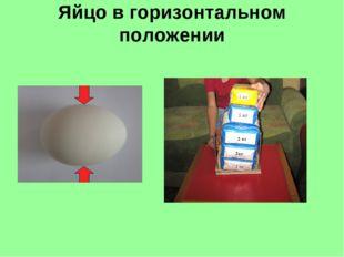 Яйцо в горизонтальном положении