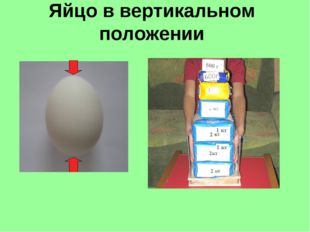 Яйцо в вертикальном положении