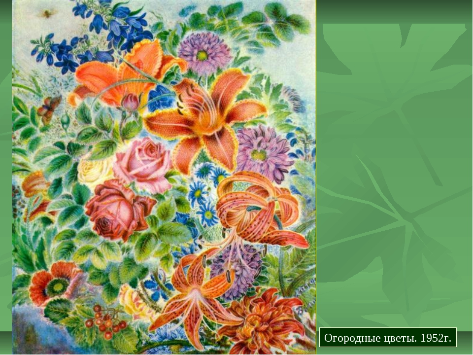 Огородные цветы. 1952г.