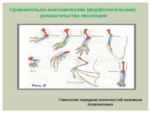 Гомология передних конечностей наземных позвоночных Сравнительно-анатомическ