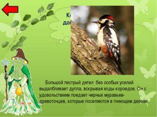 Ива Раннецветущее , опыляемое с помощью ветра дерево. Оно цветет рано весной