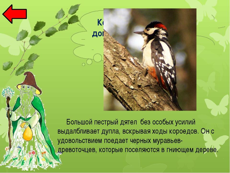 Ива Раннецветущее , опыляемое с помощью ветра дерево. Оно цветет рано весной...