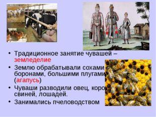 Традиционное занятие чувашей – земледелие Землю обрабатывали сохами, боронами