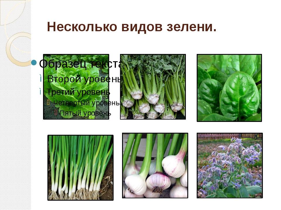 Несколько видов зелени.