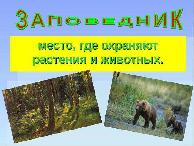 место, где охраняют растения и животных.
