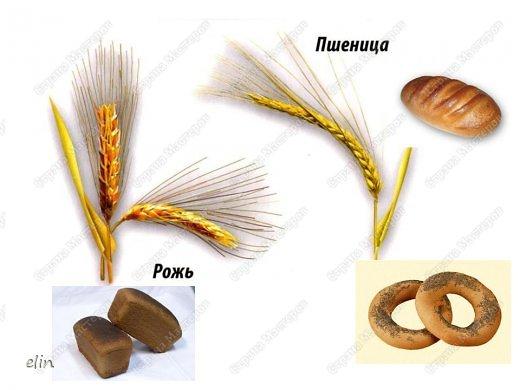 Макет модель Проект Лепка Проект Хлеб всему голова Тесто соленое фото 10