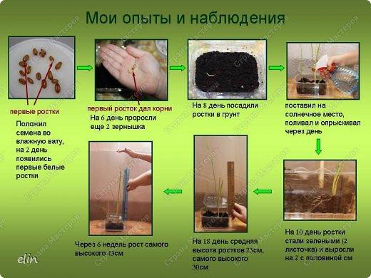Макет модель Проект Лепка Проект Хлеб всему голова Тесто соленое фото 11
