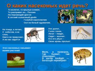 О каких насекомых идет речь? То взлетит, то крылья сложит, То расправит их...