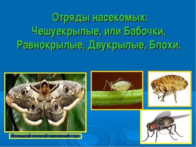 Отряды насекомых: Чешуекрылые, или Бабочки, Равнокрылые, Двукрылые, Блохи.