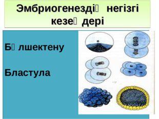 Эмбриогенездің негізгі кезеңдері Бөлшектену Бластула