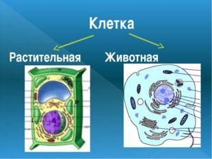 Клетка Растительная Животная