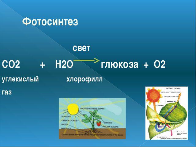 Фотосинтез свет CO2 + H2O глюкоза + O2 углекислый хлорофилл газ
