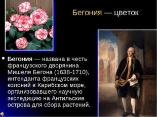 Бегония — цветок Бегония — названа в честь французского дворянина Мишеля Бего