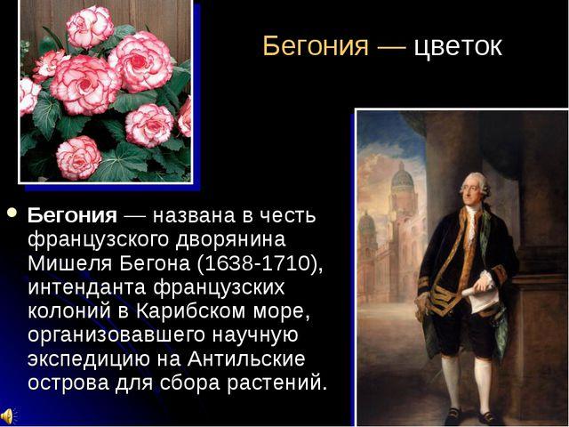 Бегония — цветок Бегония — названа в честь французского дворянина Мишеля Бего...