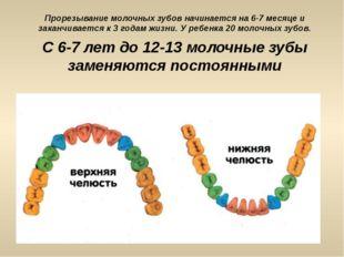 Прорезывание молочных зубов начинается на 6-7 месяце и заканчивается к 3 года