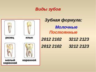 Виды зубов Зубная формула: Молочные Постоянные 2012 2102 3212 2123 2012 2102