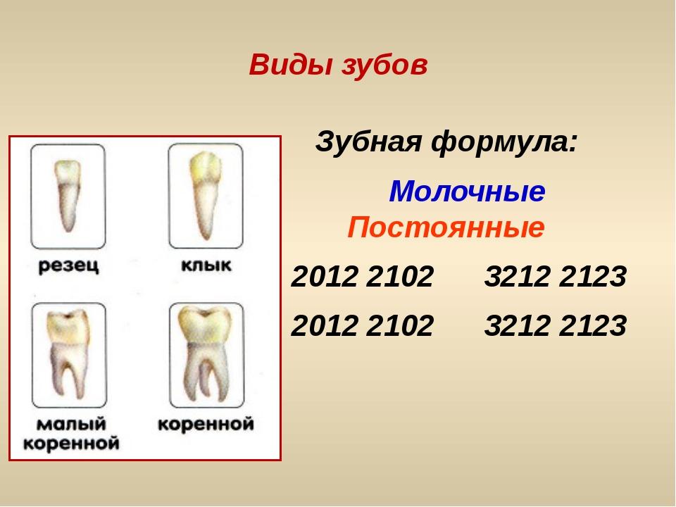 Виды зубов Зубная формула: Молочные Постоянные 2012 2102 3212 2123 2012 2102...