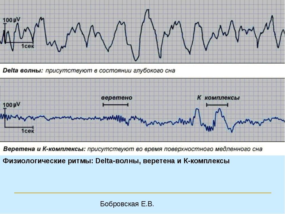 Физиологические ритмы: Delta-волны, веретена и К-комплексы Бобровская Е.В.