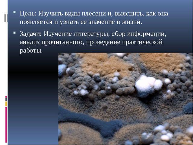 Цель: Изучить виды плесени и, выяснить, как она появляется и узнать ее значен...