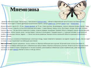 Мнемозина  Дневная бабочка из рода Парнассиусы, занесённая в Красную книгу