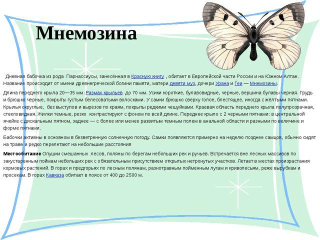 Мнемозина  Дневная бабочка из рода Парнассиусы, занесённая в Красную книгу...