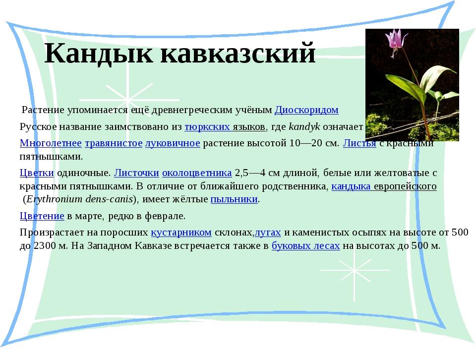Кандык кавказский Растение упоминается ещё древнегреческим учёнымДиоскоридом...