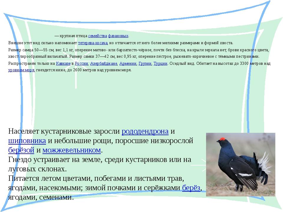 Кавка́зский те́терев Кавка́зский те́терев — крупная птица семейства фазановы...