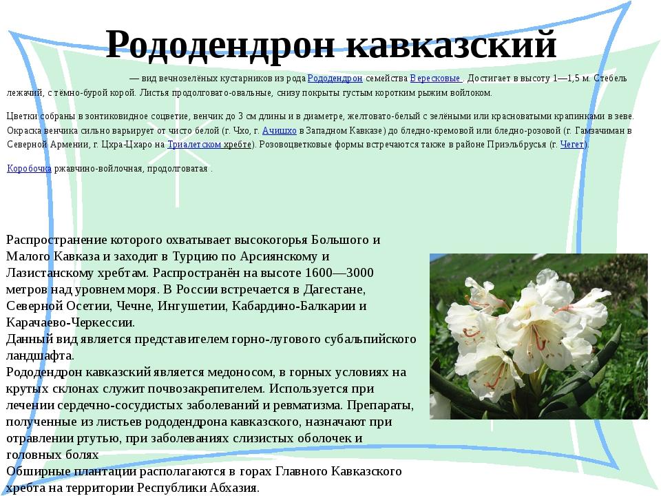 Рододендрон кавказский Рододе́ндрон кавка́зский — вид вечнозелёных кустарнико...