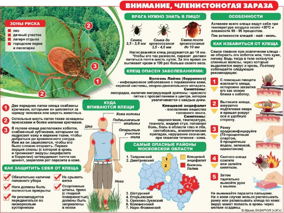 Прививка клещ энцефалит