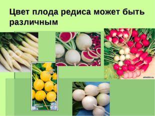 Цвет плода редиса может быть различным