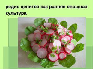 редис ценится как ранняя овощная культура