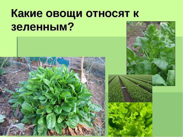 Какие овощи относят к зеленным?
