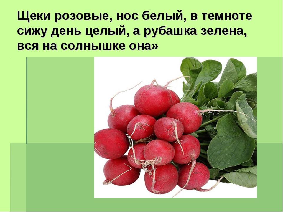 Щеки розовые, нос белый, в темноте сижу день целый, а рубашка зелена, вся на...