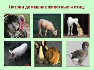 Назови домашних животных и птиц.